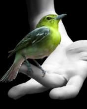 Bird on finger